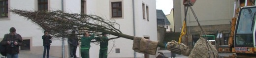 Pflanzung der Winterlinde auf dem Karl-Marx-Platz